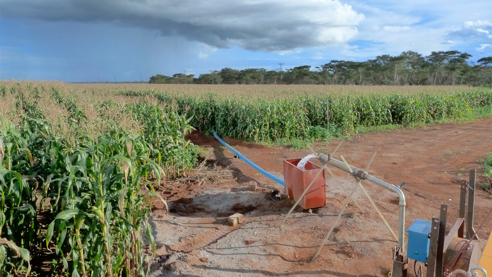 Maize crop irrigated with groundwater in Kabwe, Zambia