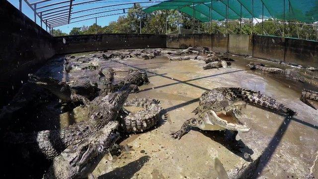 Australia: Crocodile sinks his teeth into a flying drone thumbnail