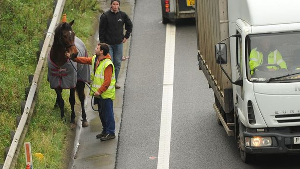 Horse being led from the scene