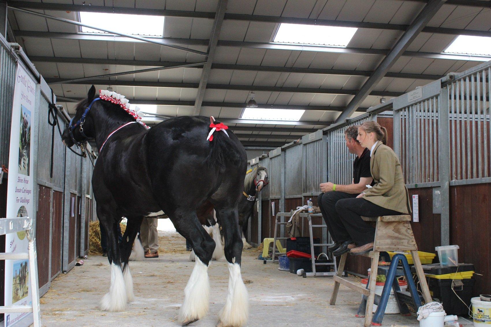 Mae na raen ar bryd a gwedd y ceffyl yma // Surely one of the finest horses in the Shire