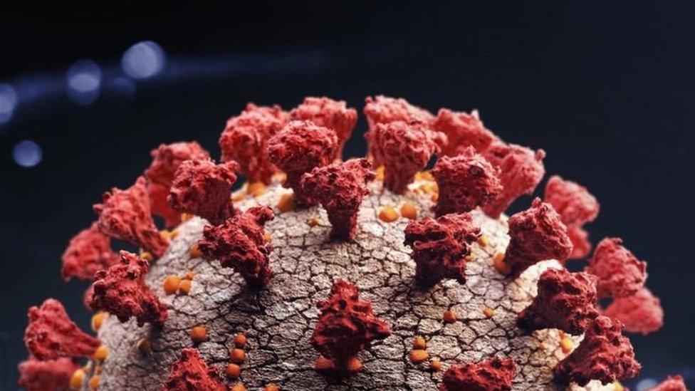 coronavírus visto por um microscópio