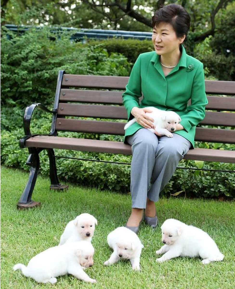 South Korea's former president Park Geun-hye and her pet dogs are seen in this handout picture provided by the Presidential Blue House and released by News1 on 20 September 2015.