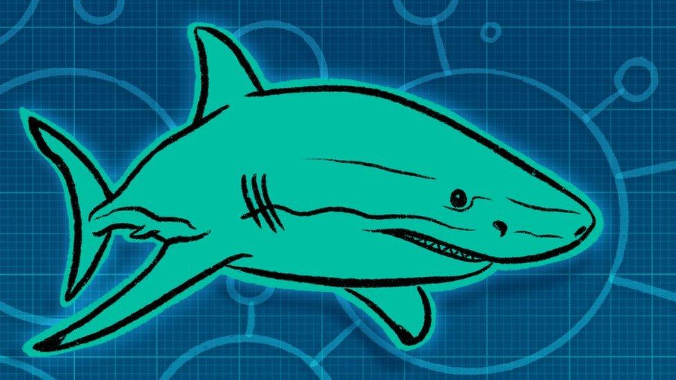 Ilustración del tiburón