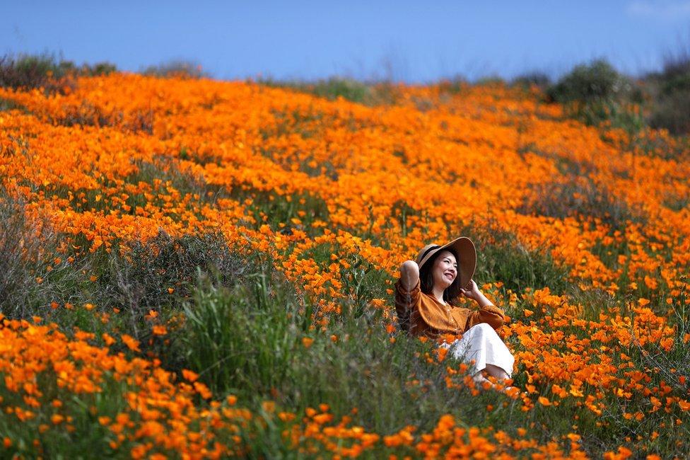 žena sedi na polju cveća