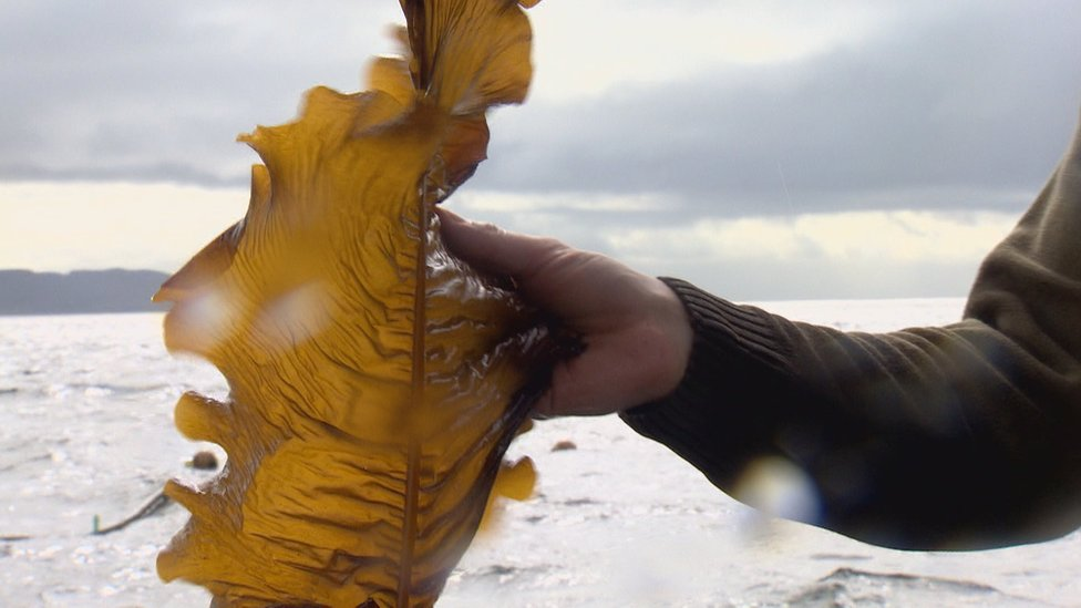 Hand holding seaweed