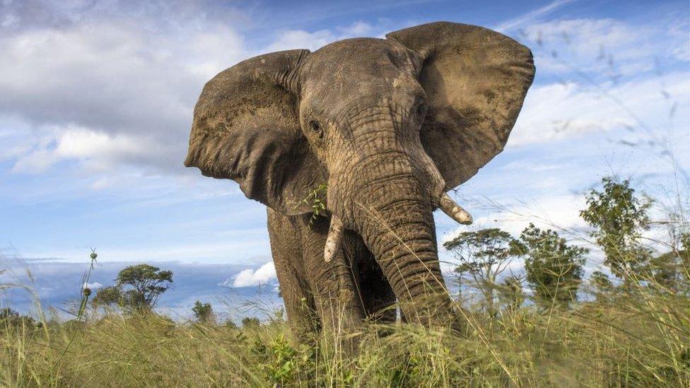 Um elefante no Parque Nacional Hwange, no Zimbábue
