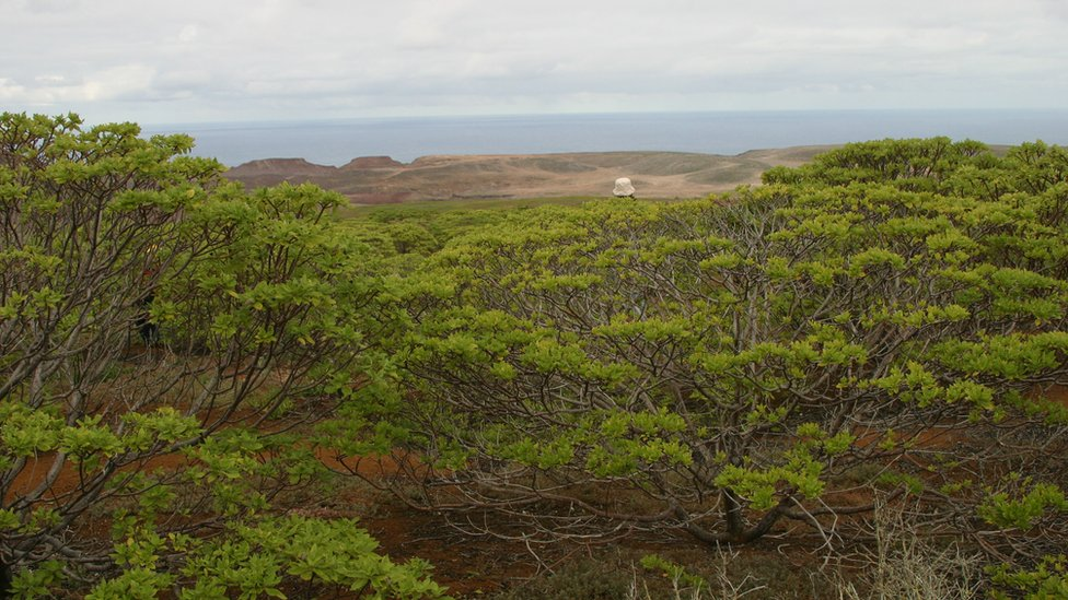The Millennium Forest in St Helena