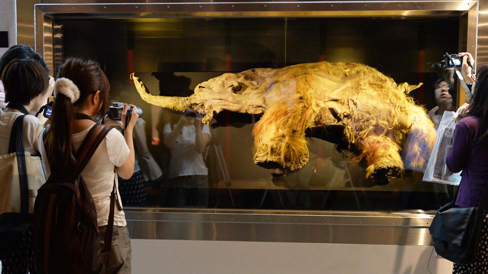 Yuka rodeado por visitantes a una exhibición con cámaras de fotos