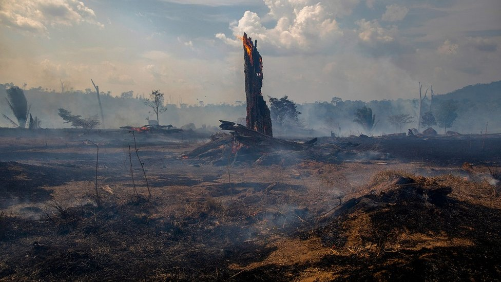 Hutan tropis Amazon yang terbakar