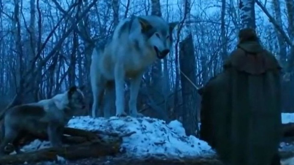"""Game of Thrones: Rise in """"wolf lookalike"""" dogs needing rehoming"""