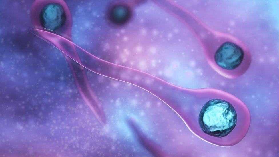 bacterias causantes del tétanos