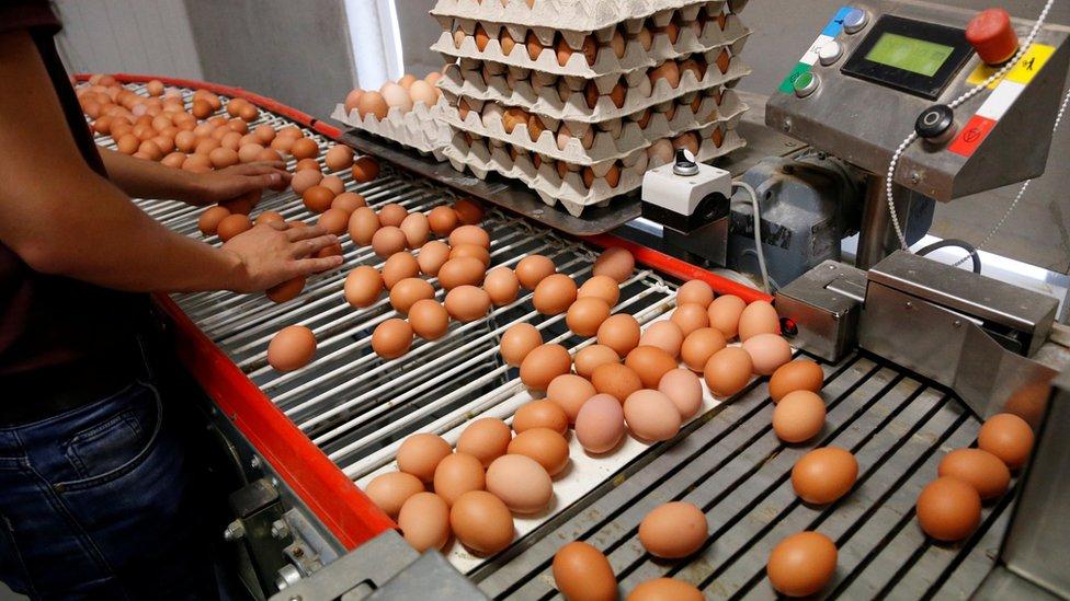 Egg production line in Wortel near Antwerp, Belgium, on 8 August 2017