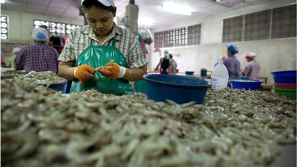 คนงานพม่าแกะกุ้ง