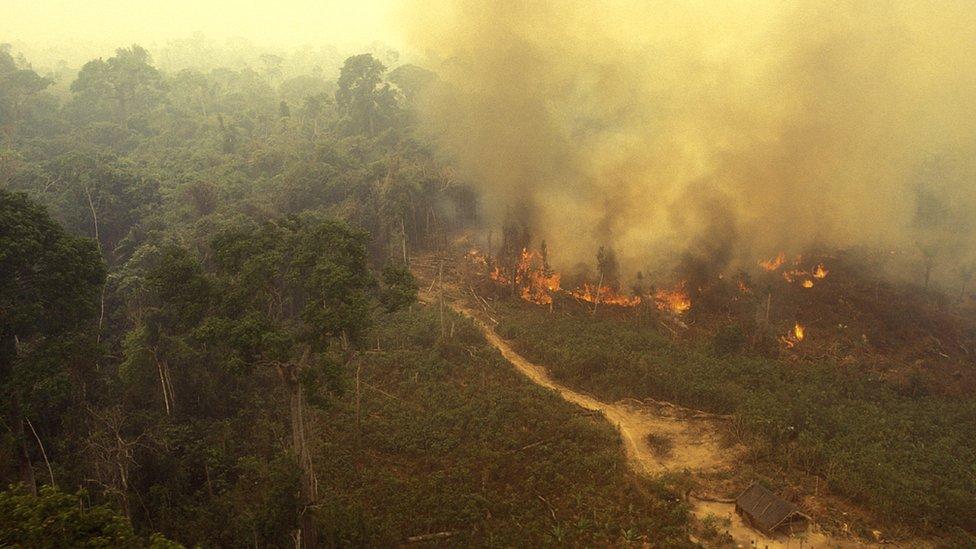 El Amazonas ardiendo