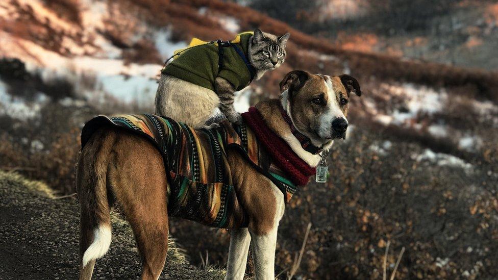 El perro parado en el lomo del perro.