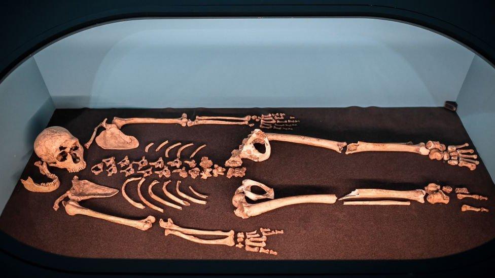 Esqueleto de neardental