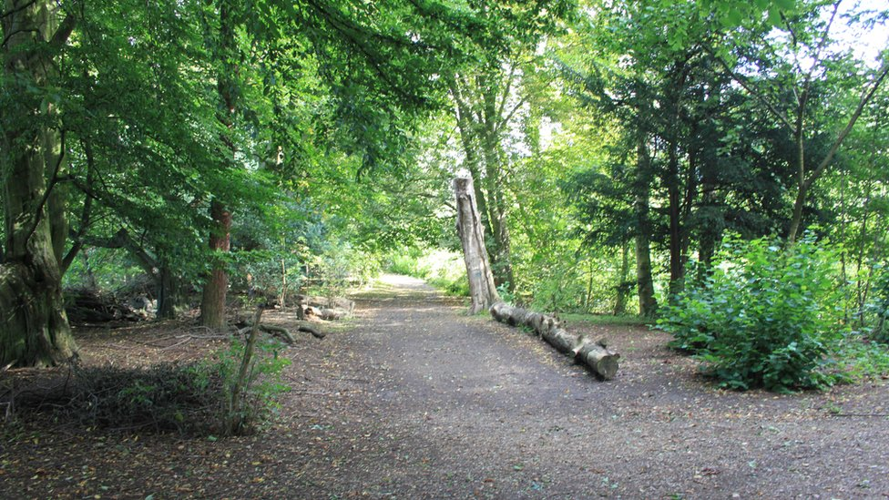 Wooded area at Hinchingbrooke Country Park.