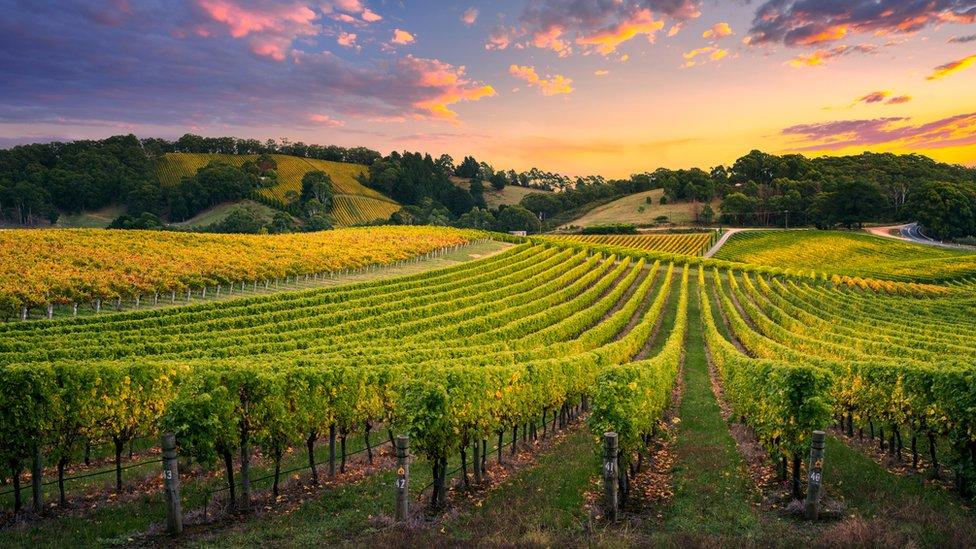 El mayor consumidor de vino en el mundo es Estados Unidos.