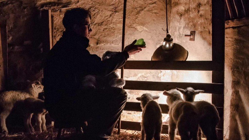 Amy Bateman wins photography award for lamb photo