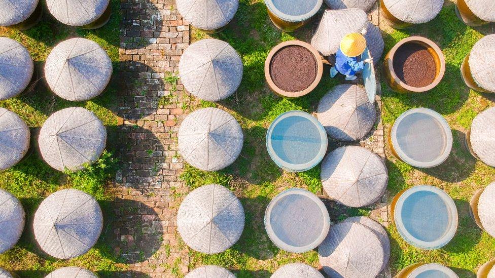 Campo de recolección de granos de soja en China.