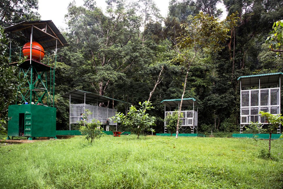 Holding cages for orang-utans at the release site of Jambi, the site of the second new viable breading population of orangutans created by SOCP.