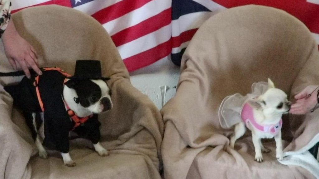 Royal Wedding: Pooches toast Harry and Meghan