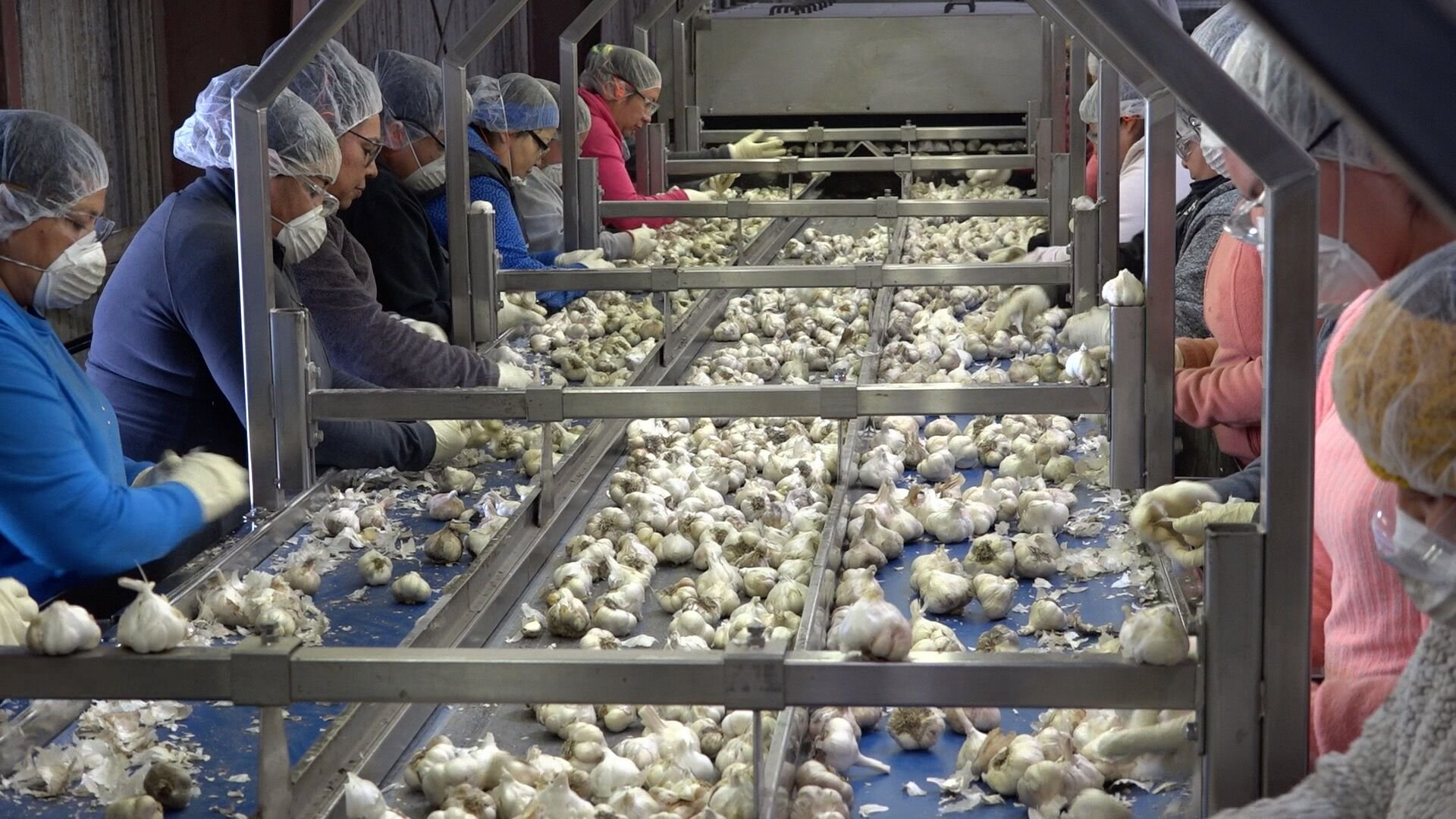 Production line at Christopher Ranch