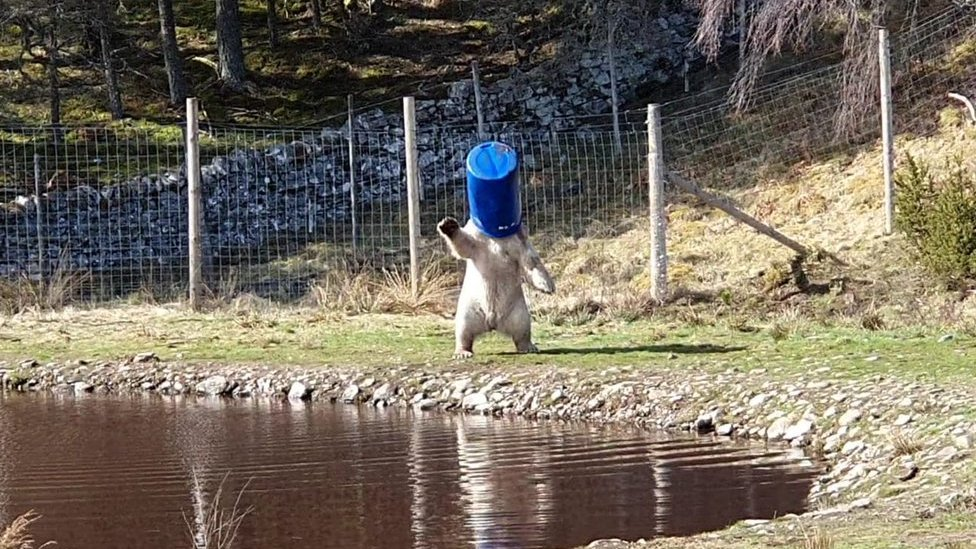 Hamish playing with a barrel