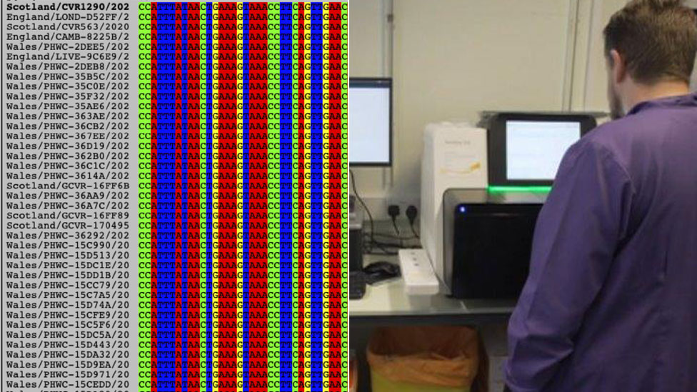 Feeding data into the computer for analysing the genetic structure