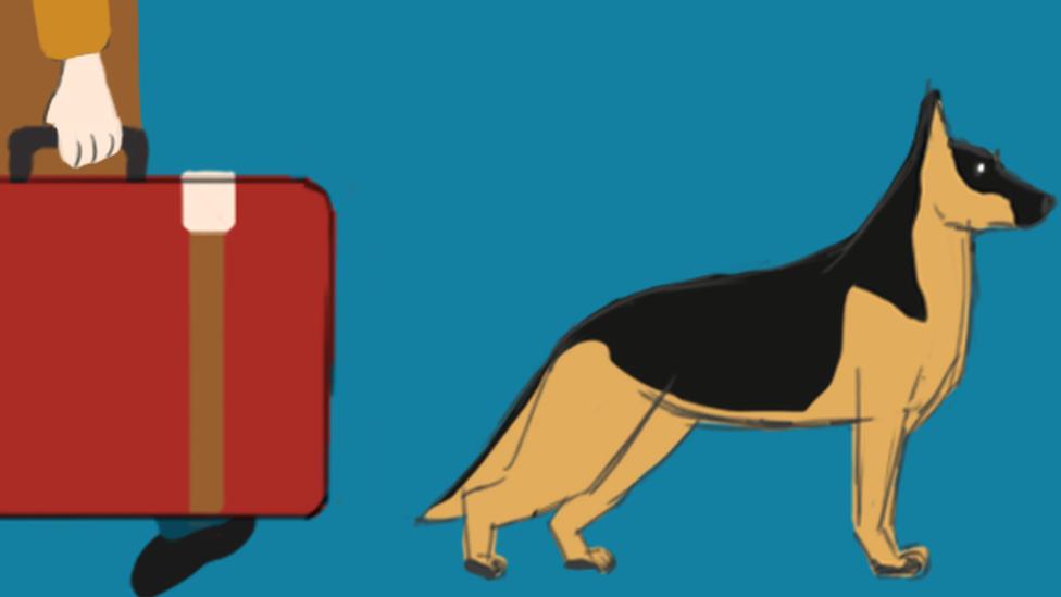 """فهل الكلاب الكويتية فعلا """"أكثر فسادا"""" من غيرها؟"""