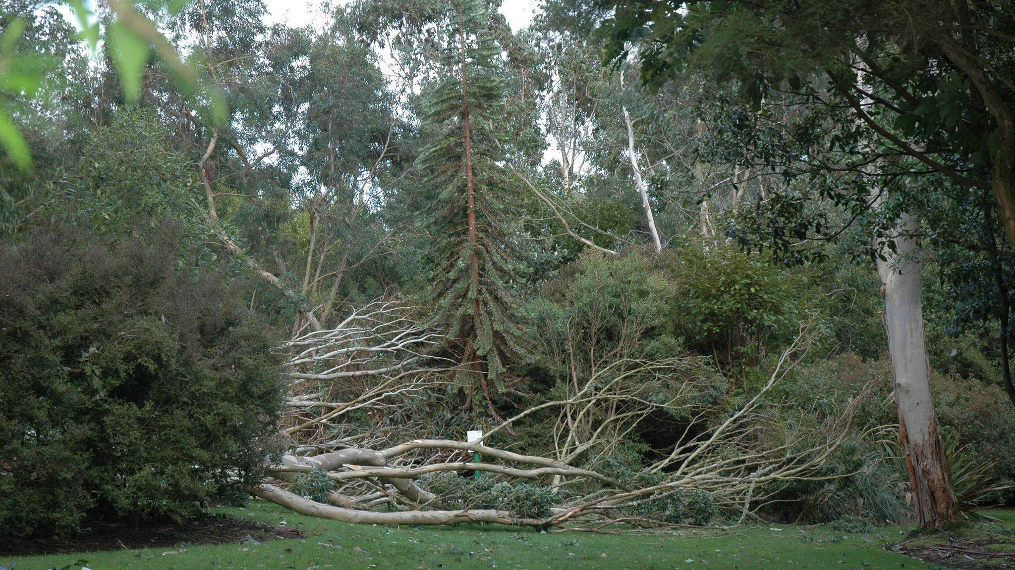 Logan Botanic Garden suffers 'sad day' with Storm Ali