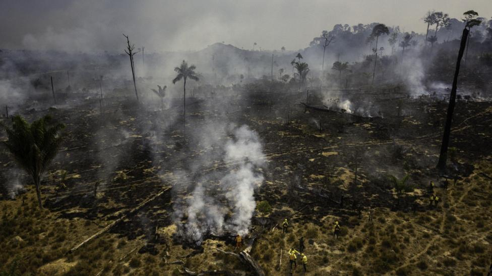 巴西的科學家發現,焚燒作物時煙霧遮蔽陽光,流感病例增加