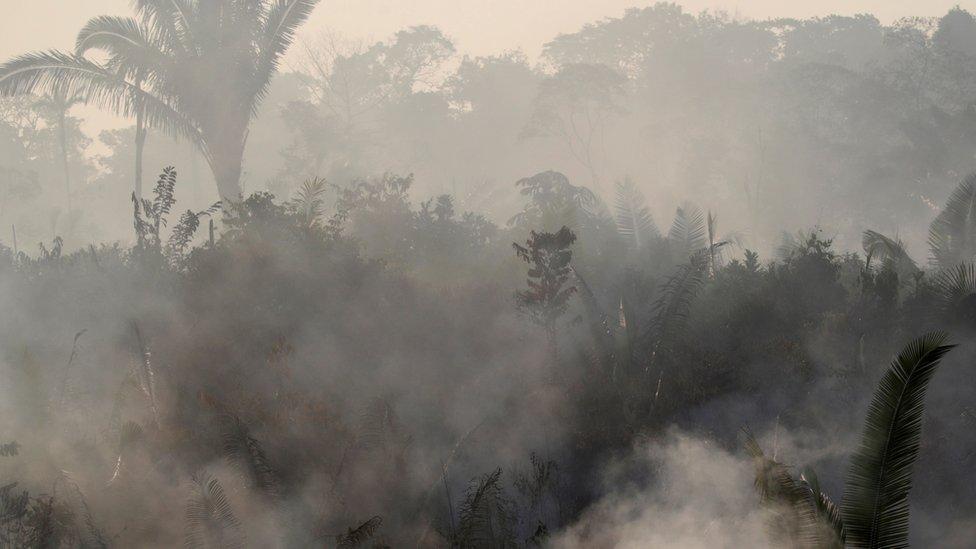 Smoke rising through the rainforest