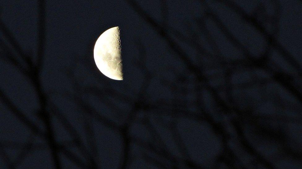 Árbol en la oscuridad y luna