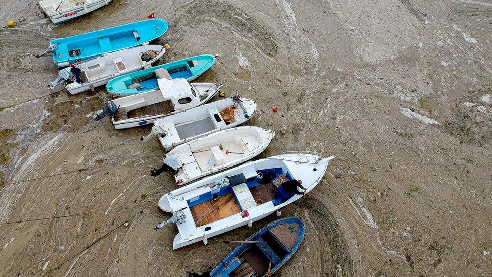 Čamci su prepuni morske sluzi