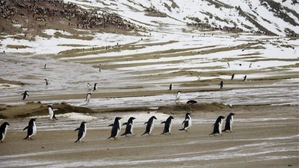 """القارة القطبية الجنوبية """"أنتركتيكا"""""""