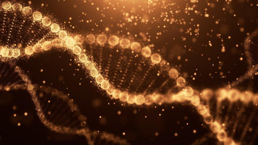 El ADN contiene instrucciones para el desarrollo del ser humano.