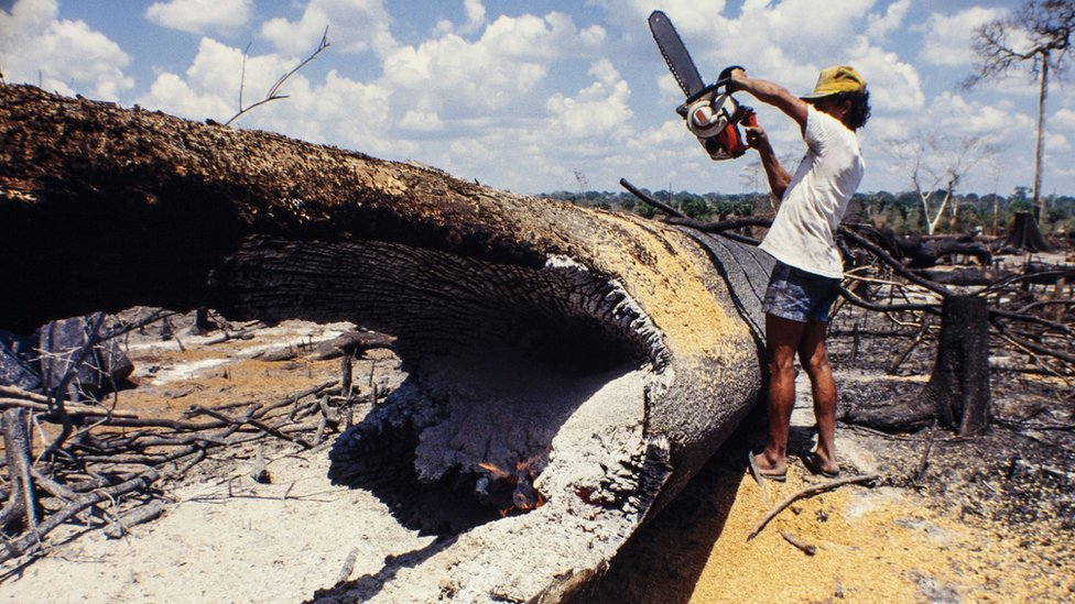 Man using a chainsaw in the the Amazon on a fallen tree