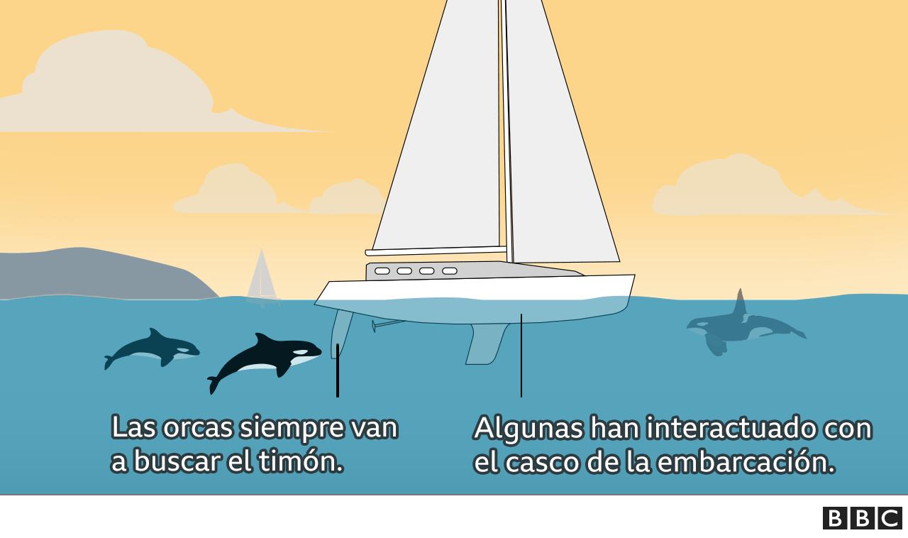 Infografía sobre las partes de un barco y la interacción de las orcas