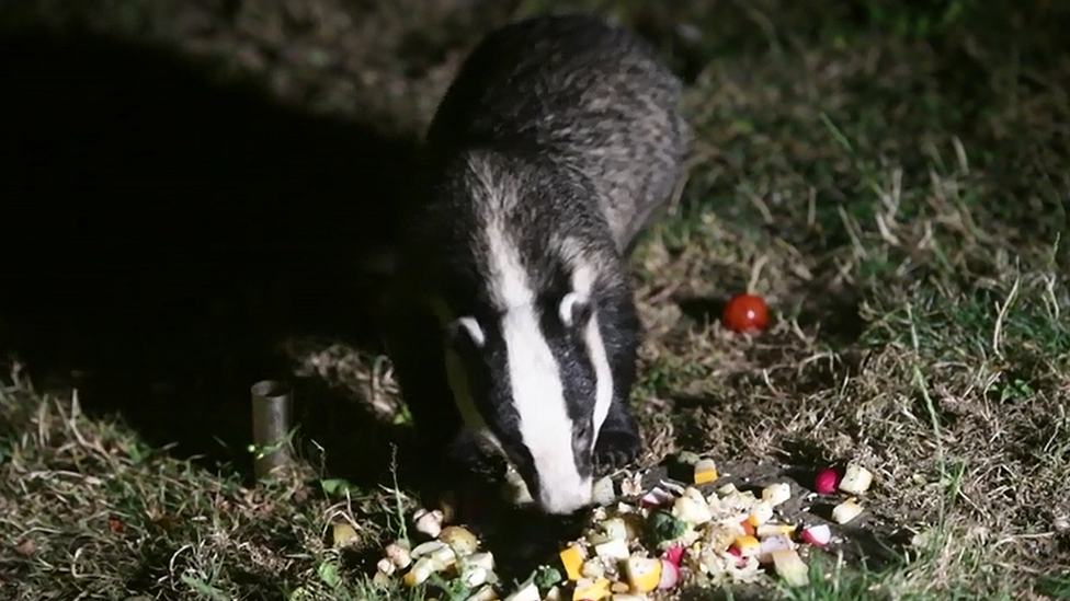 Badgers in Exeter snub purpose-built home