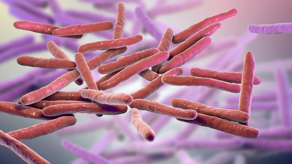Mycobacterium leprae.