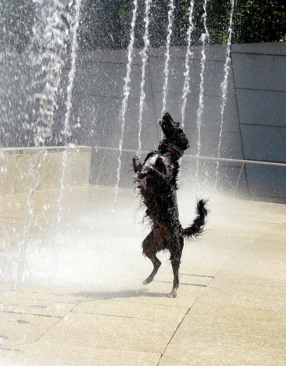 Perro en una fuente