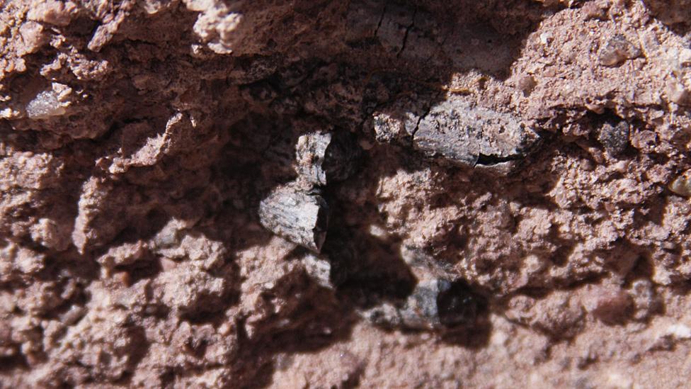 Dientes del dinosaurio en la roca