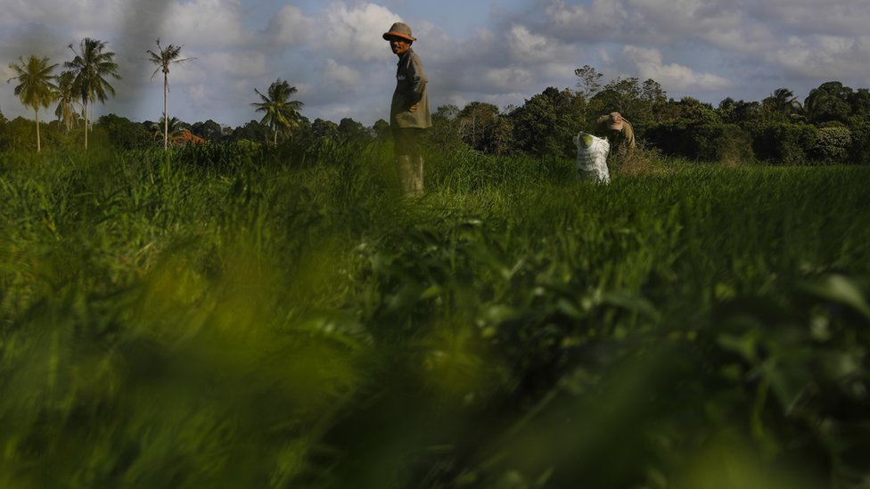 The Kelantan countryside