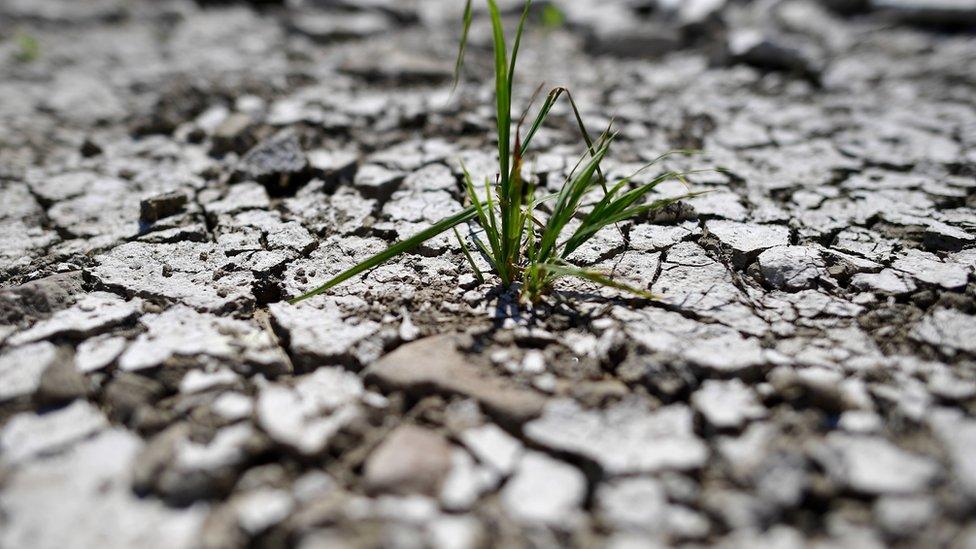 Кліматичні зміни: скільки коштувало людству глобальне потепління у 2018 році