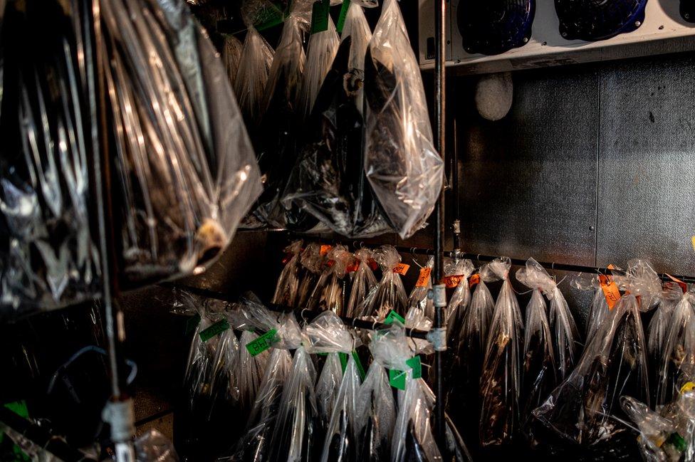 Aguilas en un congelador