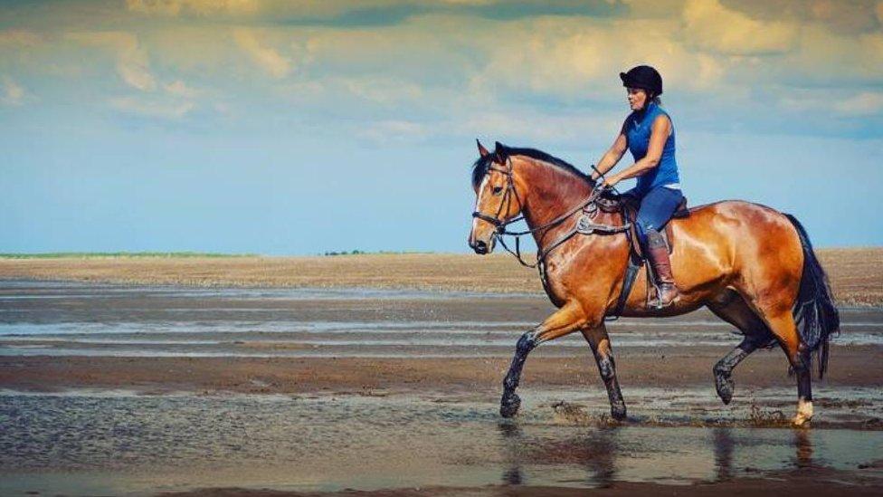 Horse injured in hit and run in Thornton, Buckinghamshire