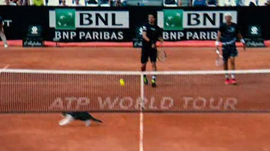 Cat invades court at Italian Open