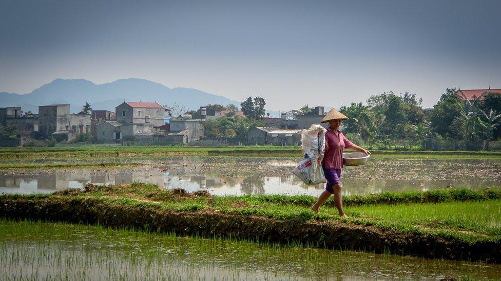 Agricultora vietnamita
