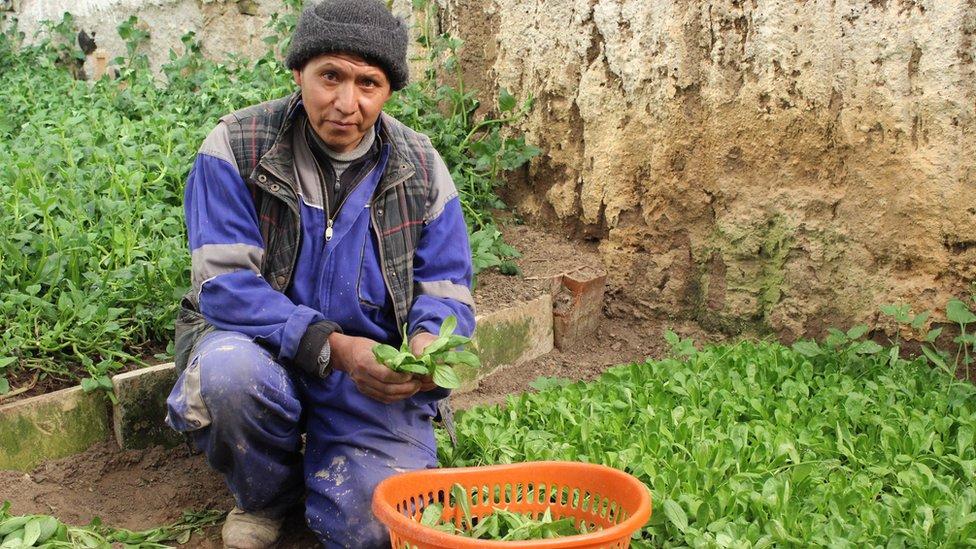"""La valerianella locusta es un tipo de lechuga poco conocida fuera de Europa, pero a través de """"El Suizo"""" se volvió un ingrediente de moda en las ensaladas de La Paz."""